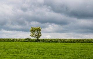 Ett ensamt träd