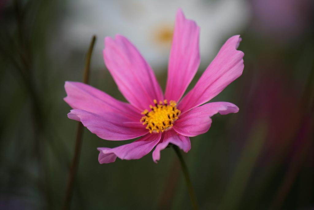 En ensam blomma