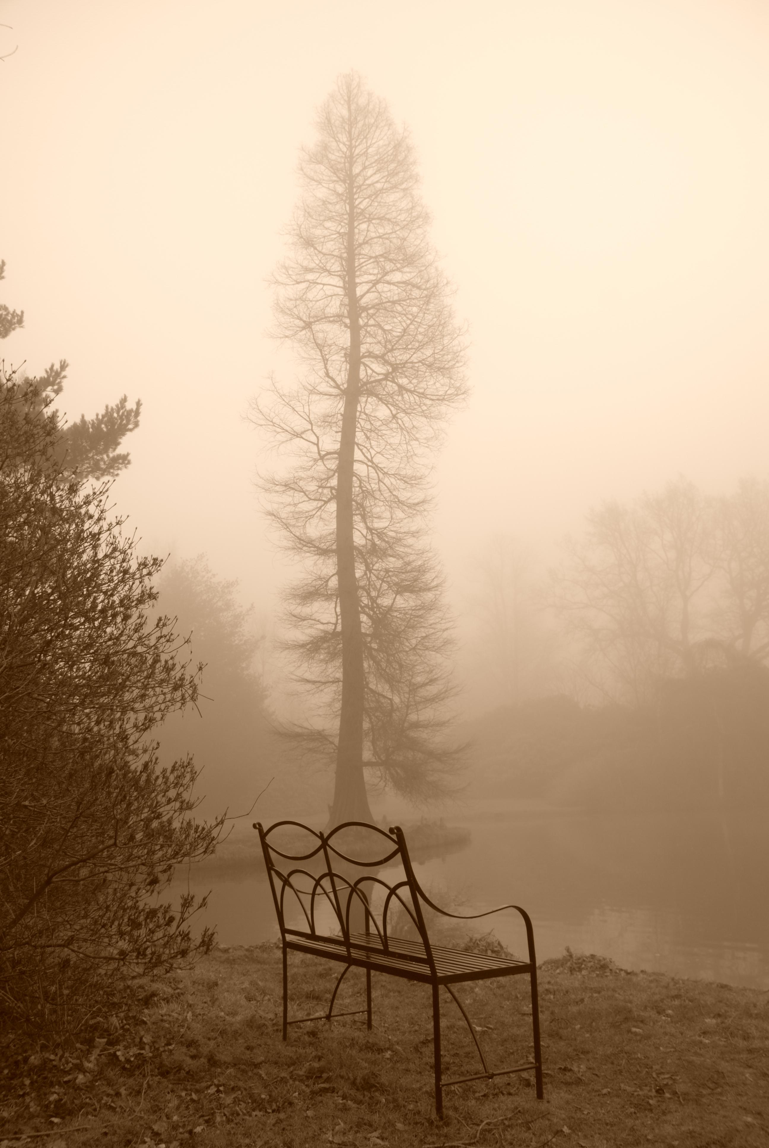 En bänk och ett träd